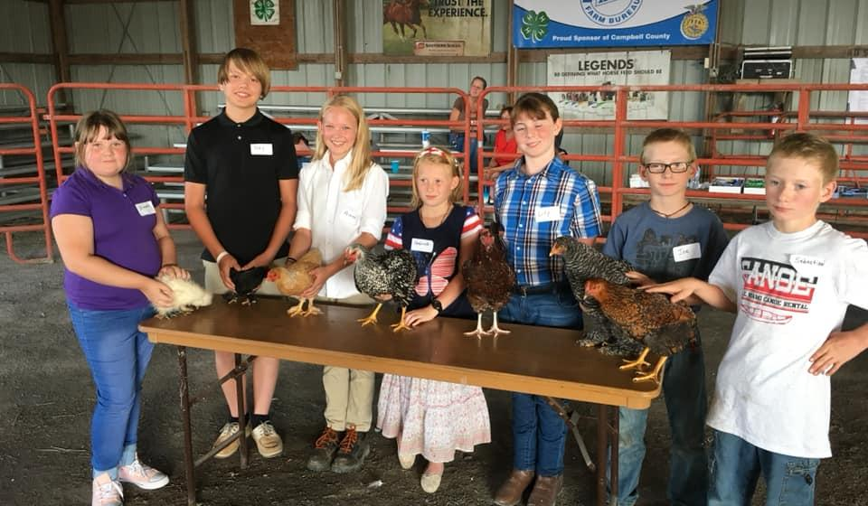 Rabbit and Poultry Show at the Alexandria Fair
